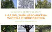 Baner - Konkurs - Lipa św. Jana Nepomucena